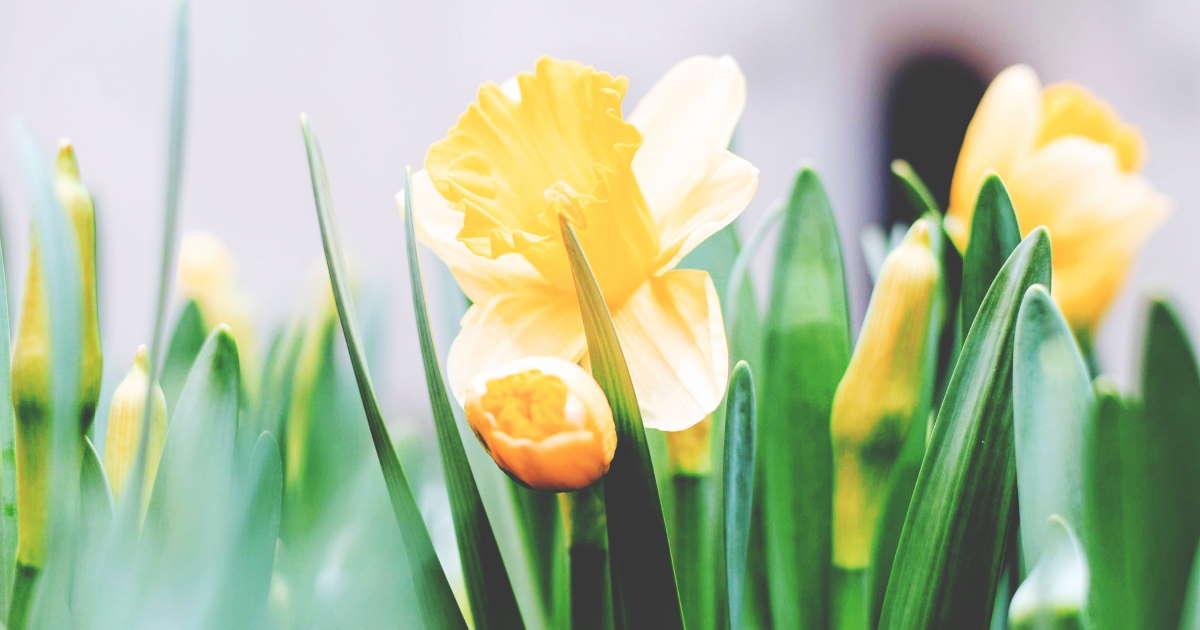 Wir wünschen Ihnen frohe Ostern 2020